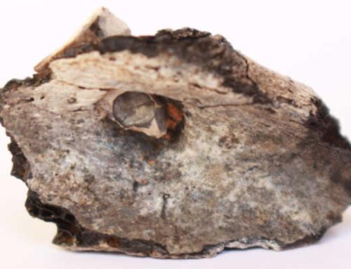 COMPTE RENDU : « Beisamoun :le plus ancien bûcher-tombe jamais mis au jour » (août 2020)